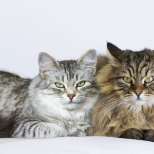 Male vs. Female Cats - Behavioral Differences