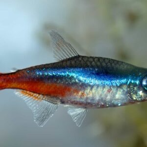 How to Treat Fin Rot in Aquarium Fish
