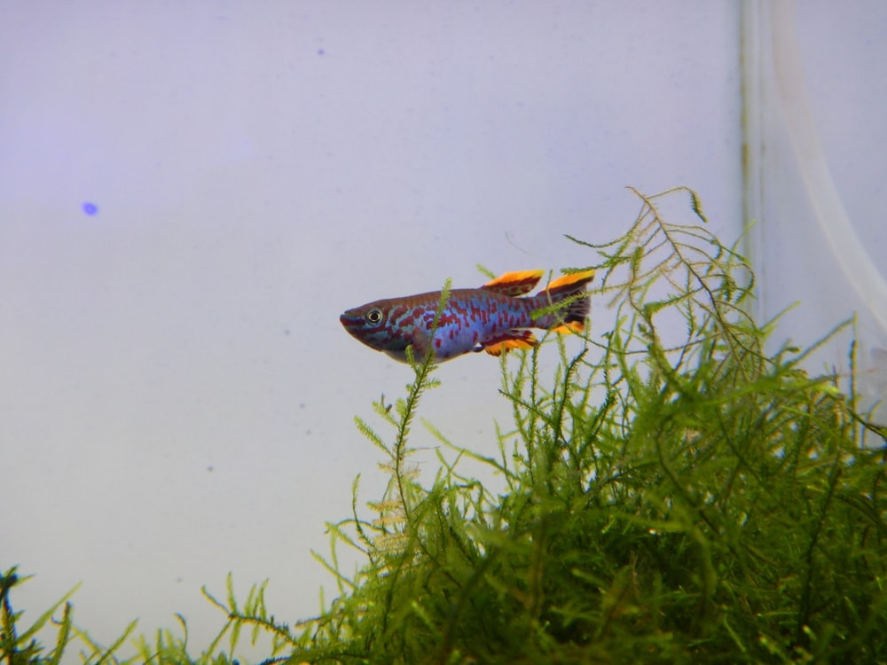 fish and java moss