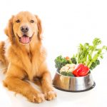 Vegetables That Are Safe for Dogs