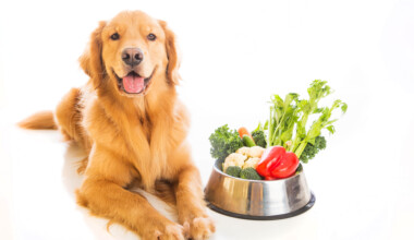 golden dog vegetables