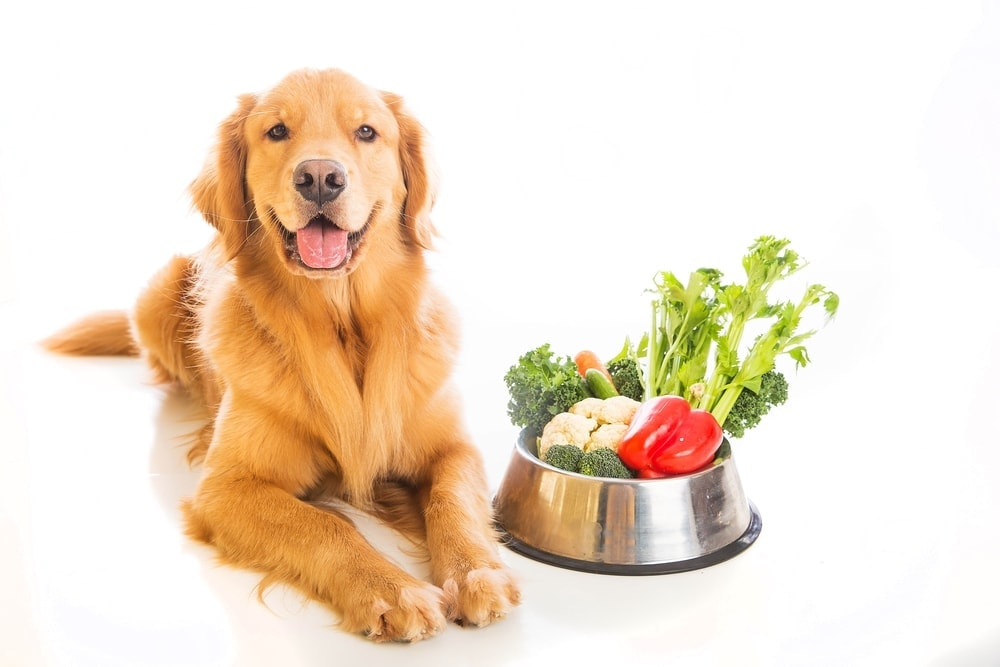 golden dog vegetables