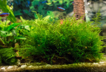 Java Moss - Care guide & Information