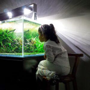 10 Gallon Fish Tank - 6 Tips & information