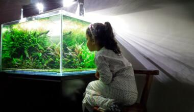 kid aquarium