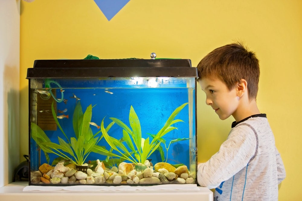 kid check aquarium