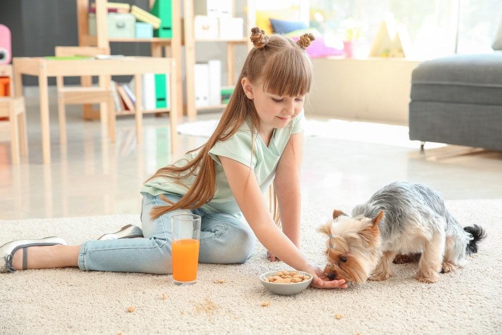 kid feeding dog with nuts