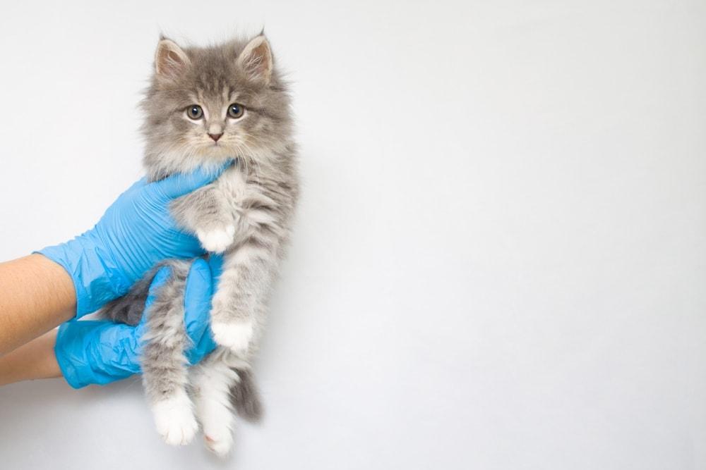 kitten holding