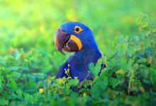 Macaw Care Guide - Types, Lifespan & More