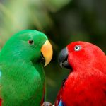 Parrot Care Guide - Types, Lifespan & More