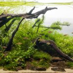 5 Easy Aquarium Plants & Information