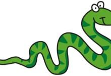 Cutest Pet Snake Breeds