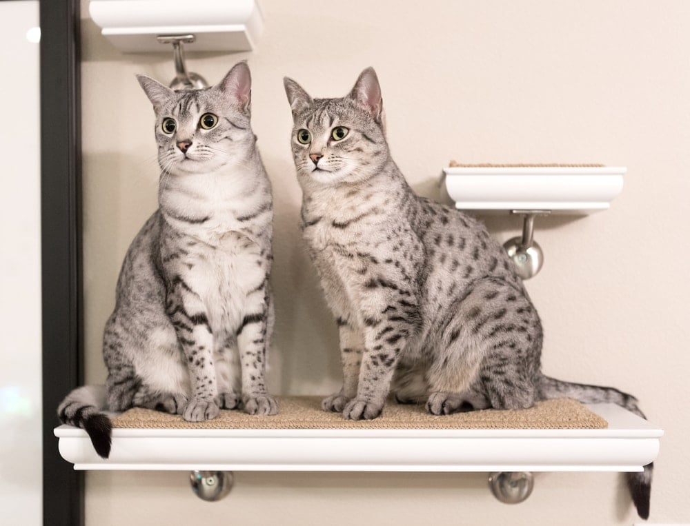 two cats at shelves