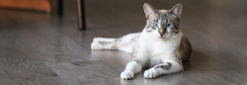 white gray cat on floor 1 e1575203485259