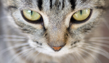 yellow cat eyes