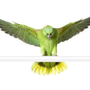 Yellow-naped Amazon Parrot - Care Guide