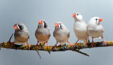zebra finch on stick
