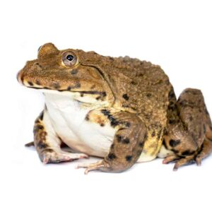 Differences Between Reptiles & Amphibians