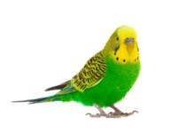 Best Birds For Apartment Living