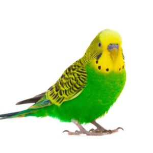 Best Birds For Apartment Living