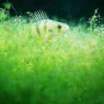 Identify & Remove Brown Algae – Information