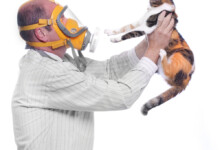 Why Are More People Allergic to Cats than Dogs?
