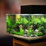 20 Gallon Fish Tank - Tips & Information