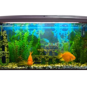 10 Low Maintenance Fish for Beginners