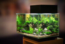 20 Gallon Fish Tank - Tips & Information