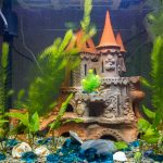 7 Aquarium Decorations & Accessories