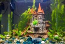 7 Aquarium Decorations & Accessories