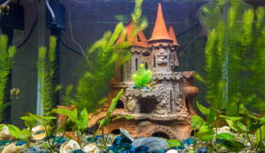 aquarium castle