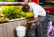 How to Clean Your Fish Tank