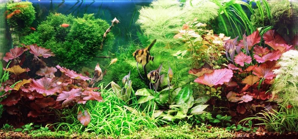 aquarium decorative plants