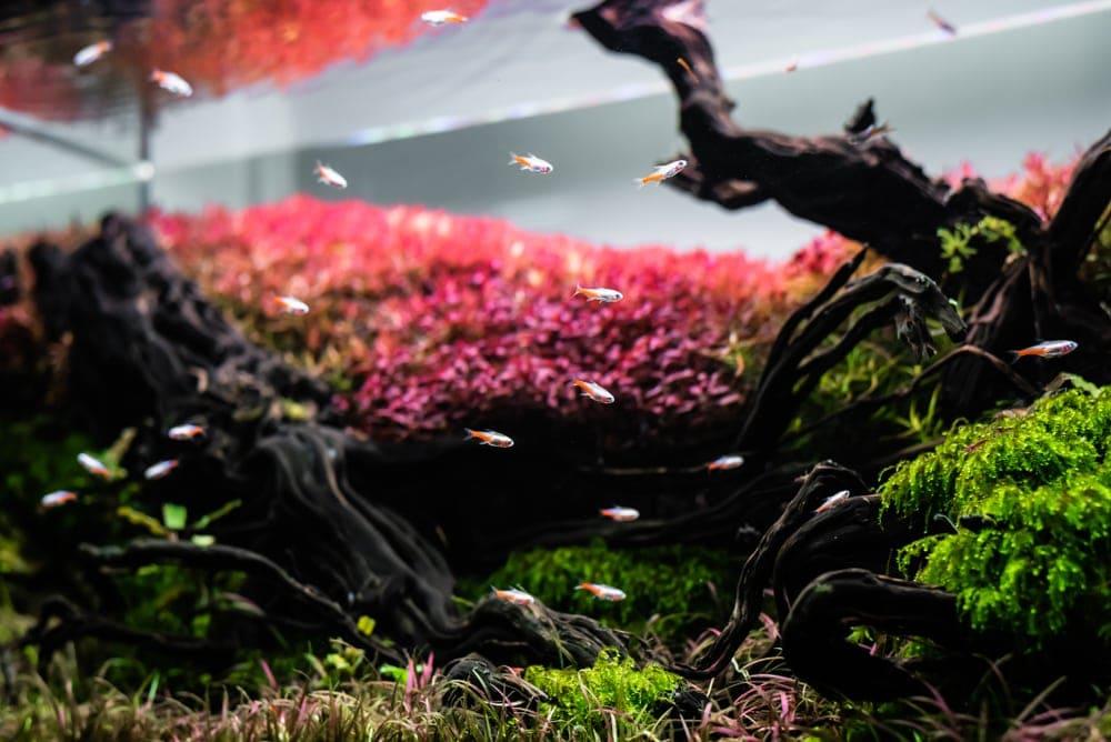 aquarium with driftwood