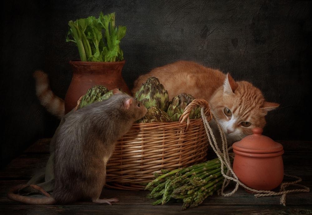 asparagus cats
