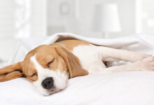 Why Your Dog is Howling in its Sleep