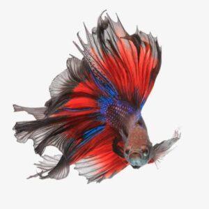 15 Exotic Freshwater Aquarium Fish