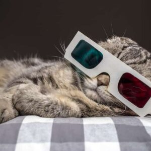 Do Cats Watch more TV than Dogs?