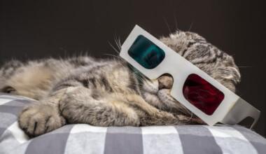 bio 3d cat