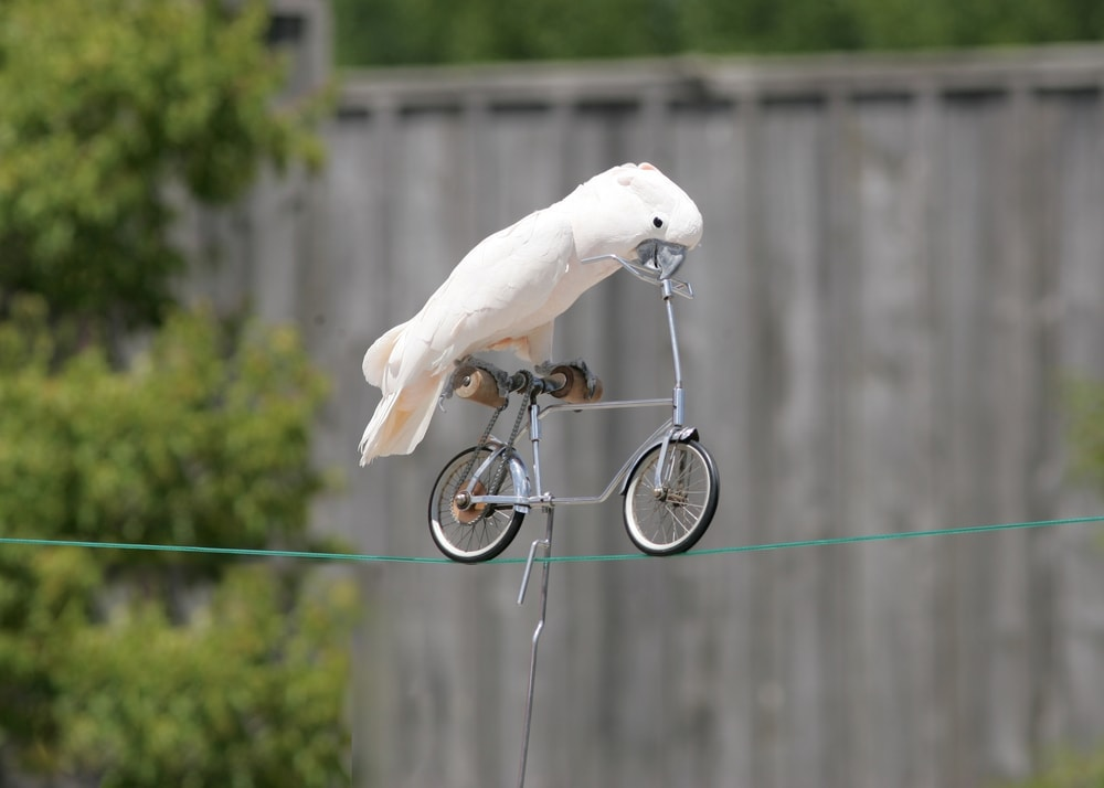 bird bicycling