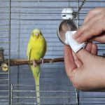 Cleaning your Birds Cage - Tips