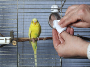 bird cage cleaning