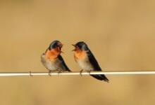 How to Teach Your Pet Bird to Talk