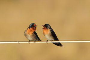 birds talk 1
