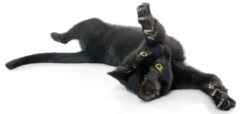 black cat back 1 e1578128405295