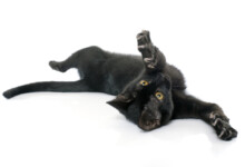 Why Does My Cats Roll Around on its Back?