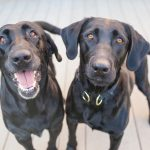 What are Bonded Pair Dogs?