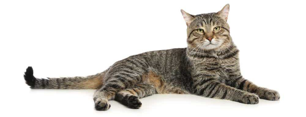 cat 2 1 e1578069178435