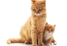 Why do Mother Cats Hide their Kittens?